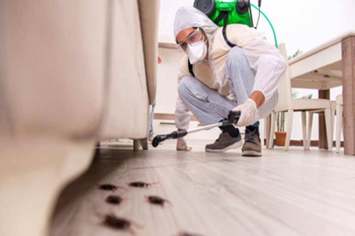 Pest Control Services May Not be the Only Solution for Pests, Try these DIY Ideas